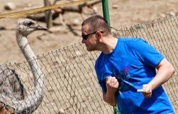 Потеха с страусом Стоковая Фотография