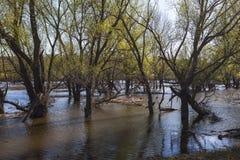 Потоки весны Стоковое Изображение RF
