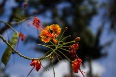 Потоки цветка стоковые изображения