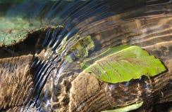 потоки Стоковое Фото
