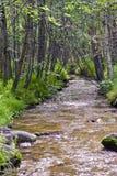 поток Аляски Стоковые Изображения RF