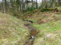 Поток бежать через лес Kielder Стоковое Изображение RF