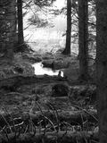 Поток бежать через лес Kielder Стоковая Фотография RF
