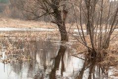 Поток весны реки с отражением деревьев стоковые фото