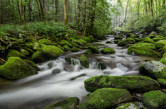 Поток вилки реветь, закоптелые горы, Теннесси Стоковое Изображение RF
