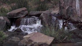 Поток воды в диком сток-видео