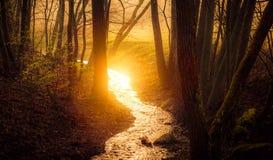 Поток воды в ходе леса стоковые фото