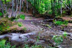 Поток воды горы в древесине Стоковое Изображение