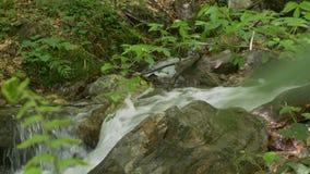 Поток воды леса Tumultous акции видеоматериалы