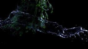 Поток воды летает рядом с пуком растительности сток-видео