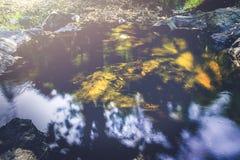 Поток водопада Потоки воды естественных лесов Стоковая Фотография