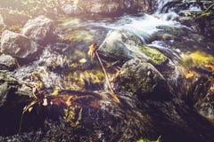 Поток водопада Потоки воды естественных лесов Стоковая Фотография RF