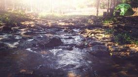 Поток водопада Потоки воды естественных лесов Стоковые Фотографии RF