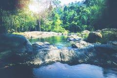 Поток водопада Потоки воды естественных лесов Стоковое Изображение RF