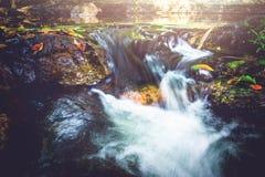 Поток водопада Потоки воды естественных лесов Стоковые Изображения