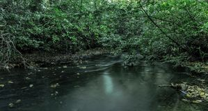 Поток в воде Вирджинии, Суррей, Великобритании Стоковые Фото