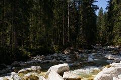 Поток в высоком Tatra Стоковые Изображения RF