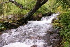 Поток в горах Altai Стоковое Изображение