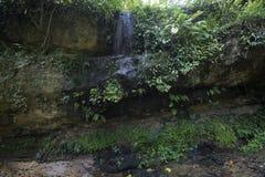Поток в джунглях стоковое изображение rf