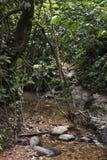 Поток в джунглях стоковое изображение