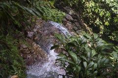 Поток в джунглях стоковая фотография rf