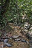 Поток в джунглях стоковые фотографии rf