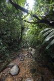 Поток в джунглях стоковое фото rf