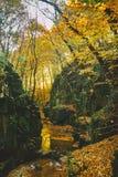 Поток в долине стоковое фото rf
