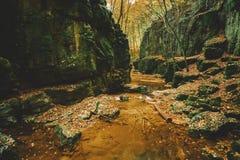 Поток в долине стоковое изображение rf