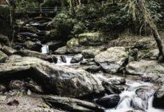 Поток в древесине стоковое изображение rf