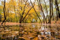Поток в лесе осени Стоковые Изображения RF