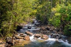Поток в лесе, подаче rill природы стоковая фотография