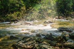 Поток в лесе, подаче rill природы стоковое изображение