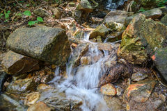 Поток в лесе, подаче rill природы стоковое фото rf