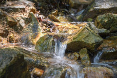 Поток в лесе, подаче rill природы стоковые изображения rf