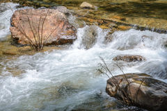 Поток в лесе, подаче rill природы стоковая фотография rf