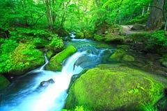 Поток в зеленом лесе стоковое фото rf