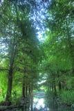 Поток в зеленом лесе Стоковое Изображение RF