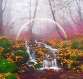 Поток в золоте леса Стоковые Фотографии RF