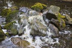 Поток в лесе стоковое фото