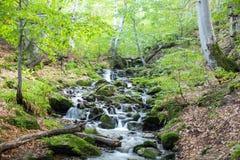 Поток в лесе горы Стоковое Изображение