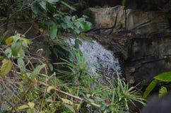 поток в лесе стоковая фотография
