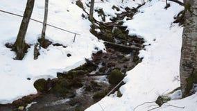 Поток в лесе зимы горы видеоматериал
