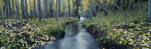 Поток в национальном лесе Uncompahgre стоковая фотография rf