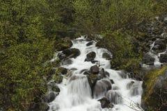 Поток в дождевом лесе Стоковые Фотографии RF