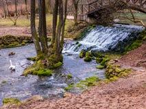 Поток в парке Стоковое Фото