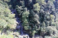 Поток в плотном лесе sanqingshan живописной местности горы, самане rgb стоковое изображение rf