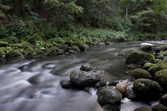 Поток в пуще Стоковое фото RF