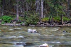 Поток в древесинах Стоковое фото RF