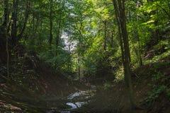 Поток в темном лесе Стоковое фото RF